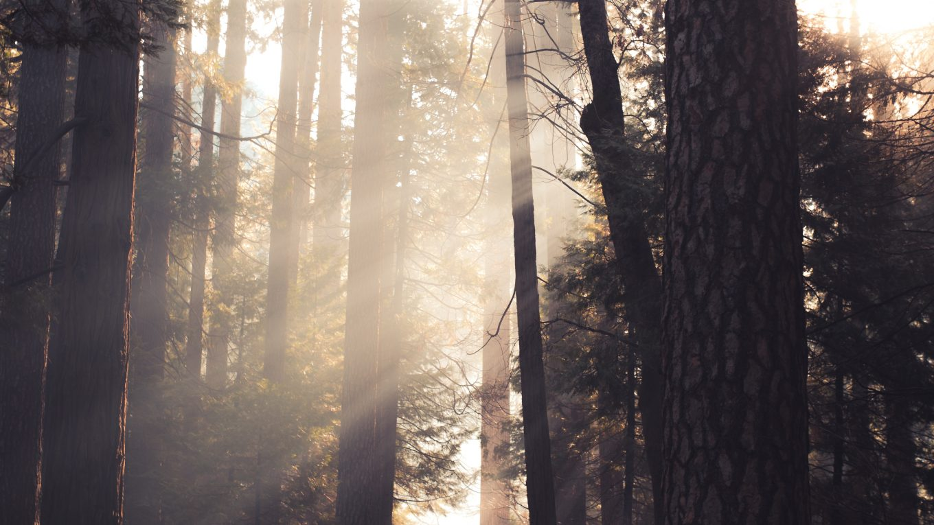 to people in a forest with sun streaming through the trees